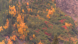 HD2008-10-2-2 autumn forest Banff Stock Video Footage