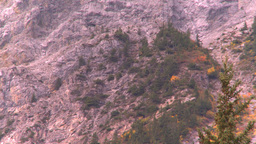 HD2008-10-2-4 autumn forest Banff Mtn Z Stock Video Footage