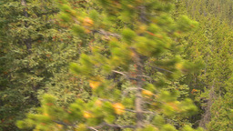 ride above forest from cable car Stock Video Footage
