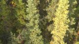 HD2008-10-2-12 Ride Above Forest Cable Car stock footage