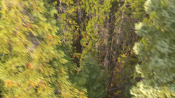 HD2008-10-2-12 ride above forest cable car Stock Video Footage