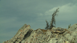 HD2008-10-2-26 top, widnswept lonely tree Stock Video Footage