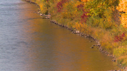 HD2008-10-2-54 bow river autumn trees Stock Video Footage