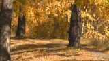 Bicycle Path Cycle stock footage