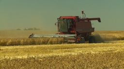 HD2008-9-2-6 combine harvest wheat field Stock Video Footage