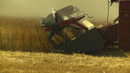 HD2008-9-2-8 combine harvest wheat field Footage
