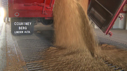 HD2008-9-3-53 grain truck unloading Footage