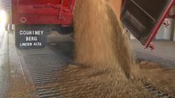 HD2008-9-3-53 grain truck unloading Footage