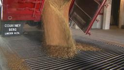 HD2008-9-3-53 grain truck unloading Stock Video Footage