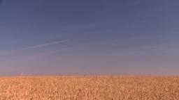 HD2008-9-3-71 ripe wheat Stock Video Footage