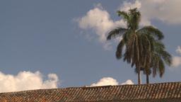 HD2009-4-5-24 Havana palm Stock Video Footage