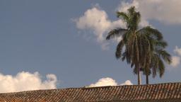 HD2009-4-5-24 Havana palm Footage