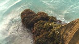 HD2009-4-6-66 Cuba beach water on rocks moss Footage