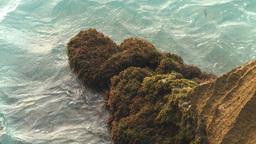 HD2009-4-6-66 Cuba beach water on rocks moss Stock Video Footage