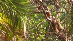 HD2009-4-7-3 Cuba jungle Stock Video Footage