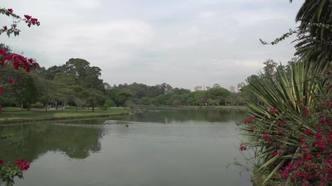 021 Sao Paulo , Ibirapuera park , pond , ducks , s Stock Video Footage