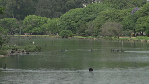023 Sao Paulo , Ibirapuera park , pond , flowers , Stock Video Footage