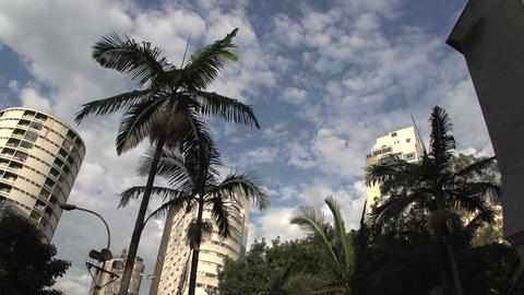 083 Sao Paulo , palmtrees , buildings , skyscraper Footage