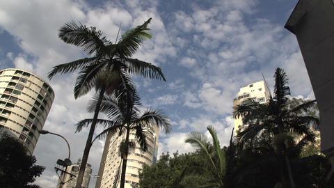 083 Sao Paulo , palmtrees , buildings , skyscraper Stock Video Footage
