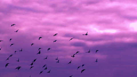 FLYING BIRDS IN THE SUNSET SKY stock footage