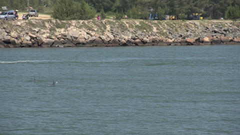 054 Laguna , Group of dolphins coming out of the w Footage
