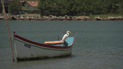 060 Laguna , Snowy Egret on an Fishingboat 2 Footage