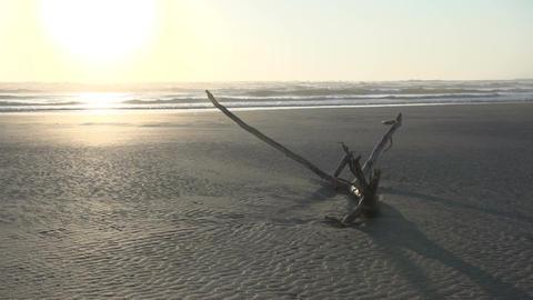 0101 Laguna , sunrise at the beach , piece of wood Footage