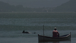 0127 Laguna , fisherman in boat , dolphins out of  Footage