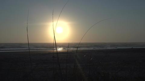 099 Laguna , sunrise at the beach Stock Video Footage