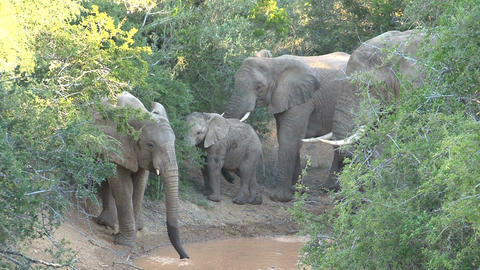 Group of elephants playing with water Stock Video Footage