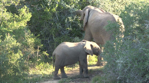 Elephants playing Stock Video Footage
