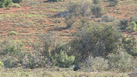 Big group of elephants walking in landscape Stock Video Footage