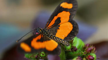 Butterfly landing on flower and flying away Stock Video Footage