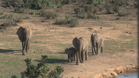 Group of elephants passing by at pond Stock Video Footage