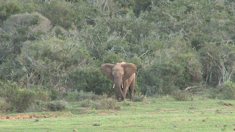 Elephant Stock Video Footage