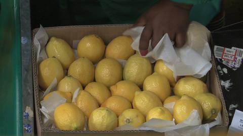 Lemons Factory Stock Video Footage
