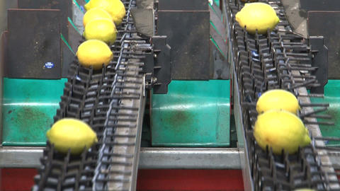Lemons Factory Stock Video Footage