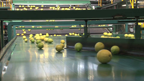 Lemons Factory Footage