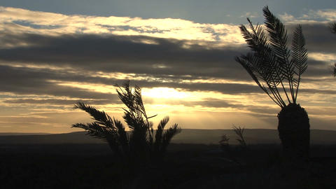 Sunset, palmtrees Stock Video Footage