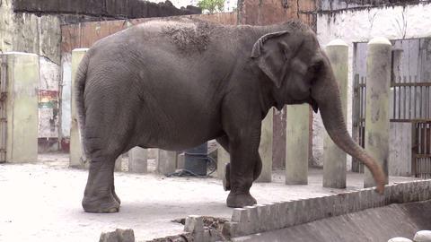 elephant at manila zoo Stock Video Footage