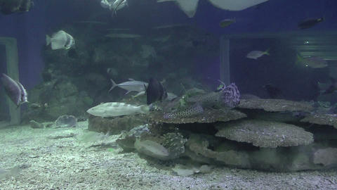 fishes on huge aquarium Stock Video Footage