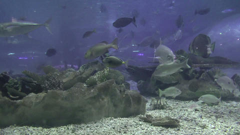 large fishes on aquarium Footage