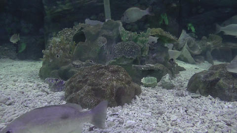park aquarium fishes Stock Video Footage