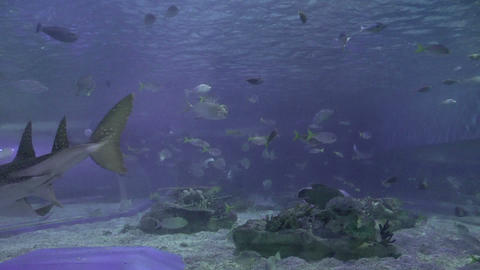 ocean park aquarium Footage