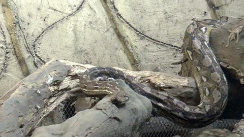 python crawling Footage