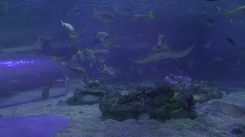 shark on park aquarium Footage