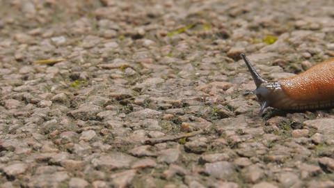 Crawl slowly slug Stock Video Footage