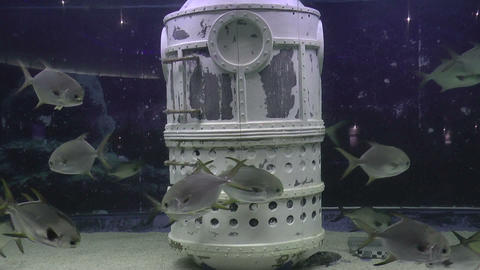 underwater scene Footage