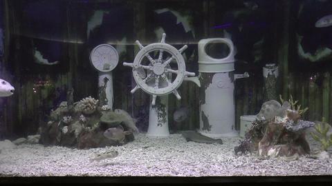 underwater design Stock Video Footage