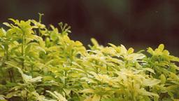 Nature Rain On A Plant Footage